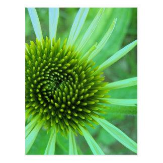 Flowers & Plants Postcard