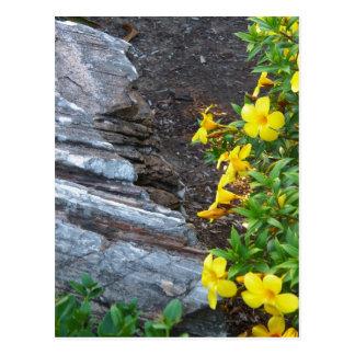 Flowers Rock Soil by Leslie Peppers Postcard