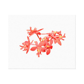 Flowers Salmon Tinted Ground Orchid Gallery Wrap Canvas