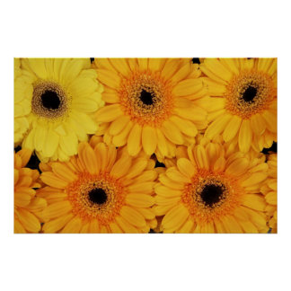 Flowers to Brighten the Day Poster