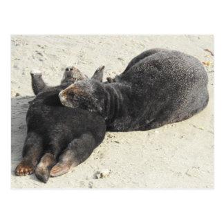 Fluffiest Pillow Sea Otter Postcard