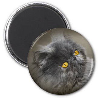 Fluffy Black Cat with Orange Eyes Magnet