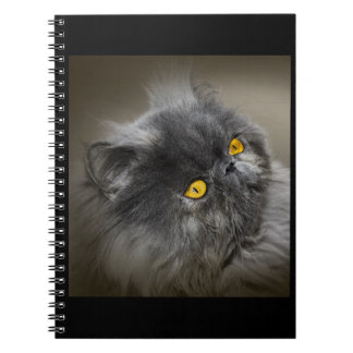 Fluffy Black Cat with Orange Eyes Notebooks