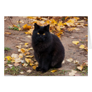 Fluffy Black Kitty and Autumn Leaves Card