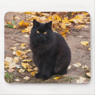 Fluffy Black Kitty and Autumn Leaves Mouse Pad