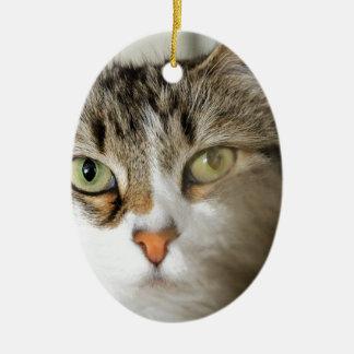 Fluffy Cat Close up Ceramic Oval Ornament