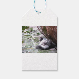 Fluffy cat sleeping crouch on the floor gift tags