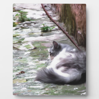 Fluffy cat sleeping crouch on the floor plaque