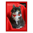 Fluffy Cat Wearing Christmas Collar - Card