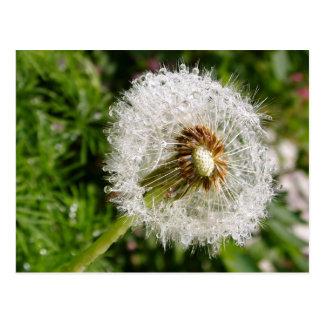 Fluffy dandelion MS JOH 2011 Postcard