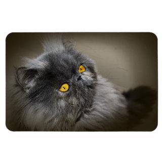 Fluffy Dark Gray Black Cat with Orange Eyes Magnet