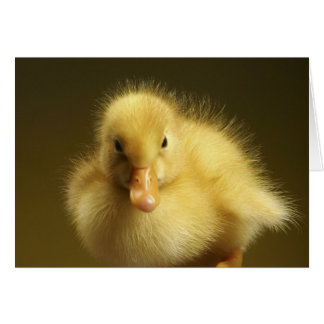 Fluffy Duckling Card