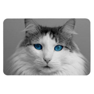 Fluffy Gray and White Blue-Eyed Cat Magnet