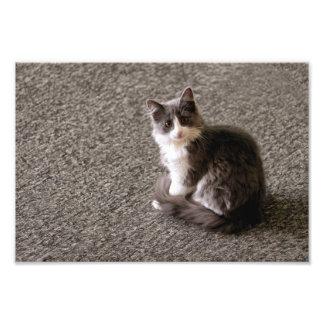 Fluffy kitten. photo print