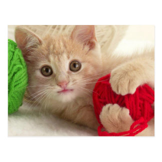 Fluffy Kitten Plays with Balls of Wool Postcard