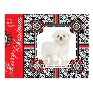 Fluffy Little Dog Wishes You a White Christmas Postcard