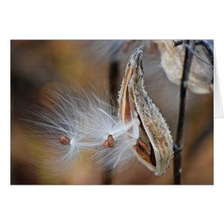 fluffy milkweed seedling card