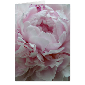 Fluffy Pink Peony Card