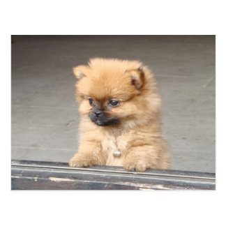 Fluffy Puppy Postcard