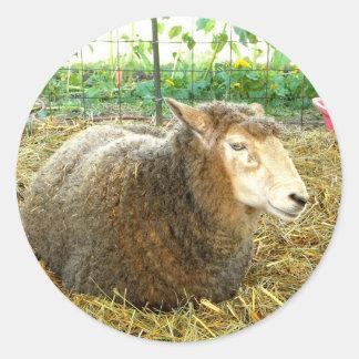 Fluffy Sheep Classic Round Sticker