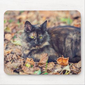 Fluffy Tortoiseshell Kitty in Autumn Mouse Pad