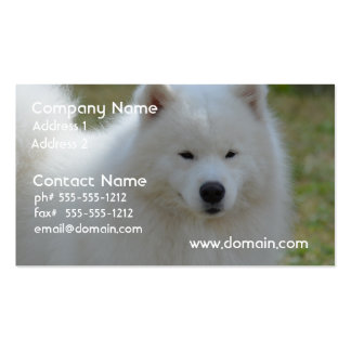 Fluffy White American Eskimo Dog Pack Of Standard Business Cards