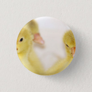 Fluffy Yellow Ducklings 1 Inch Round Button