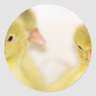 Fluffy Yellow Ducklings Round Sticker