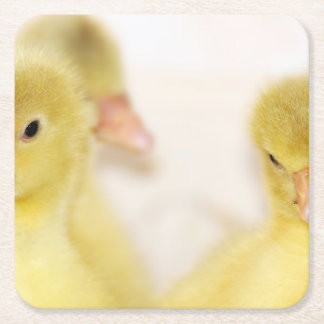 Fluffy Yellow Ducklings Square Paper Coaster