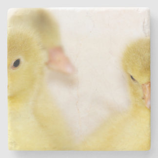 Fluffy Yellow Ducklings Stone Coaster