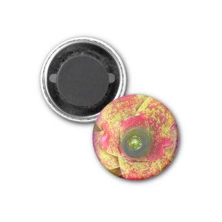 Fluorescent Succulent   Customizable Magnet
