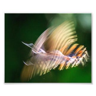 Flutterby Photo Print
