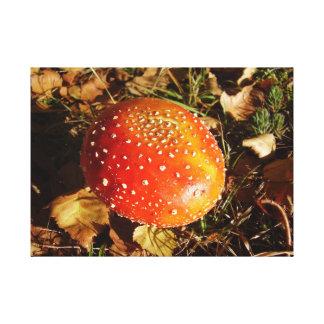 Fly Agaric Mushroom Canvas Print
