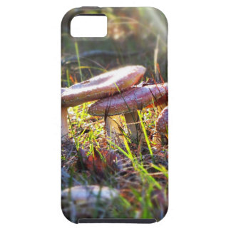 Fly Amanita in the Woodlands Case For The iPhone 5