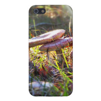Fly Amanita in the Woodlands Cover For iPhone 5/5S