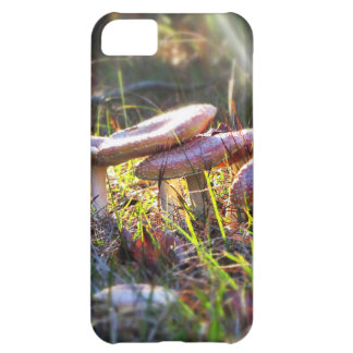 Fly Amanita in the Woodlands iPhone 5C Cases
