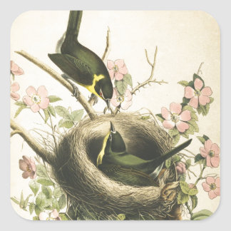FLY CATCHER BIRD AND NEST SQUARE STICKER