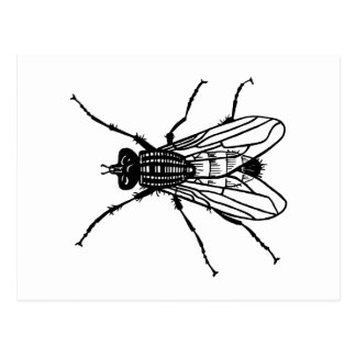 Fly drawing - insect, pest, flies postcard