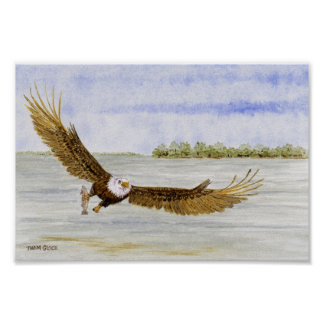Fly Fishin'- Bald Eagle Poster