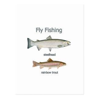 Fly Fishing Rainbow Trout - Steelhead Postcard