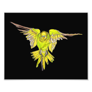Flying Australian Budgie Bird Parakeet Photo Print