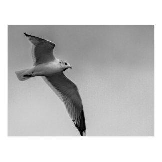Flying bird postcard