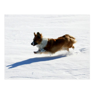 Flying Cardigan Welsh Corgi Postcard