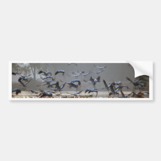 Flying cranes bumper sticker