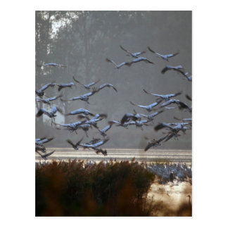 Flying cranes on a lake postcard
