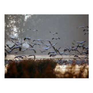 Flying cranes postcard