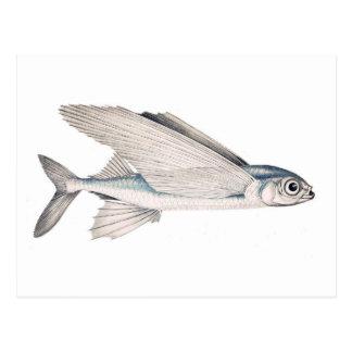 Flying Fish Exocoetidae Postcard