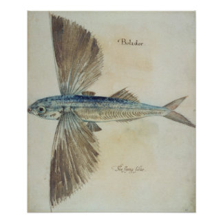 Flying-Fish Poster