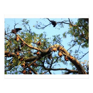 Flying fox fruit bat colony in trees postcard