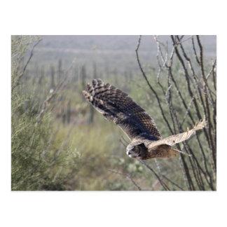 Flying Great Horned Owl Postcard